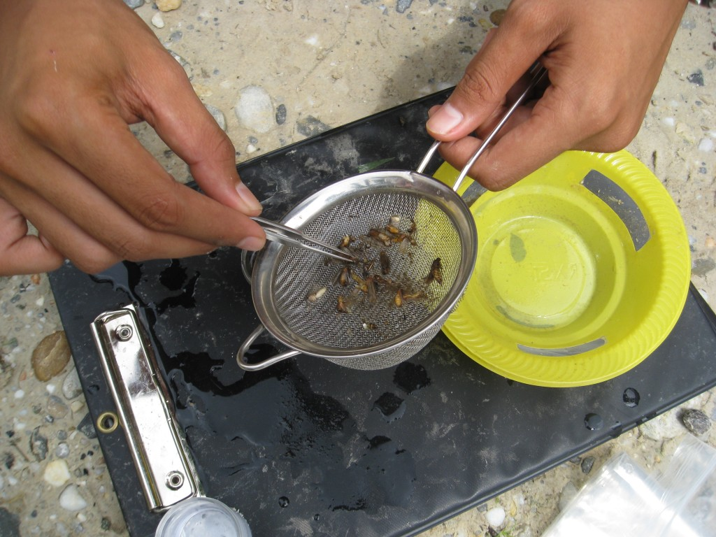 BEFTA_Turner Collecting insects caught in a pan trap