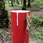 Large bagworm hiding behind plot post